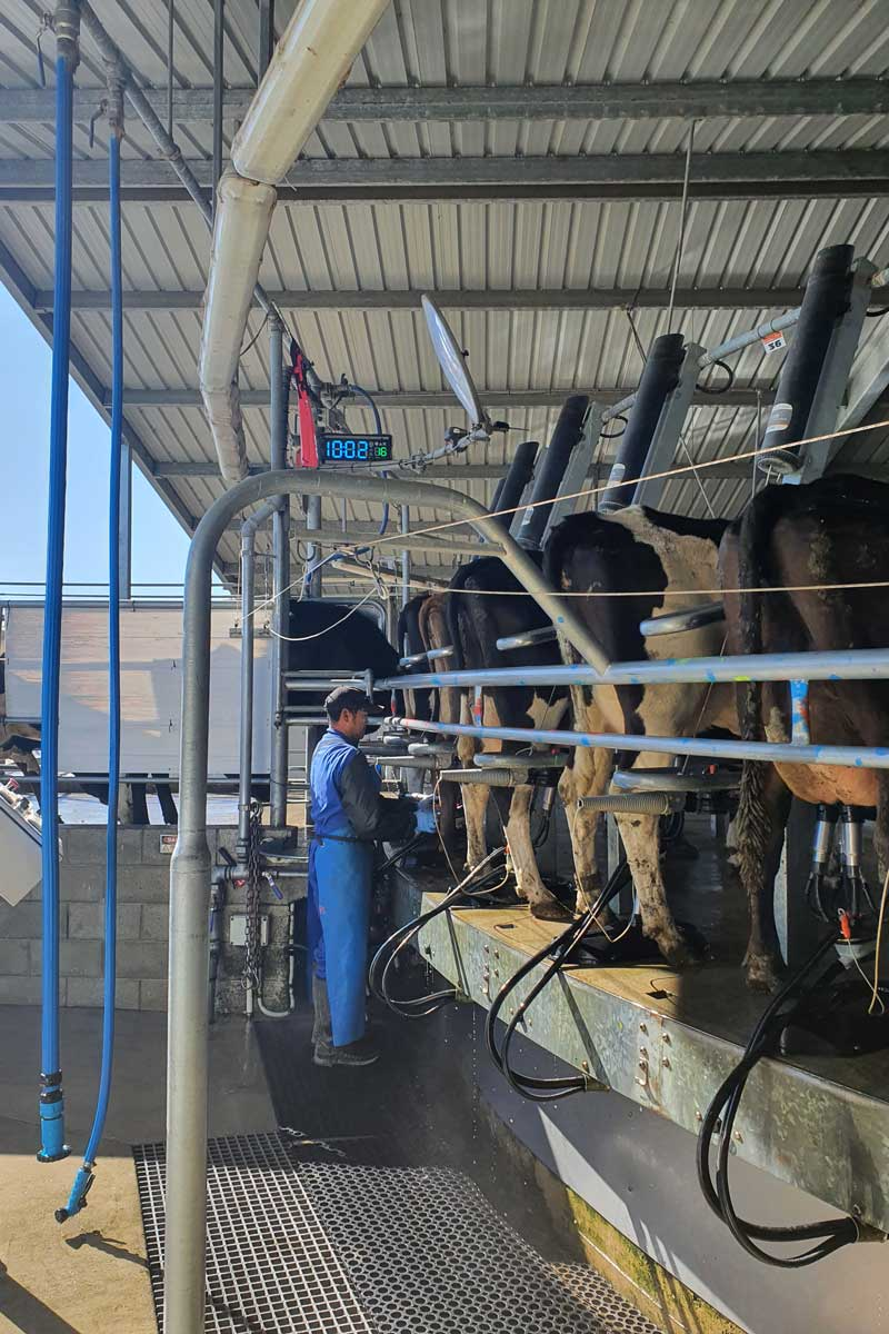 Mbt-milker-rotary-dairy