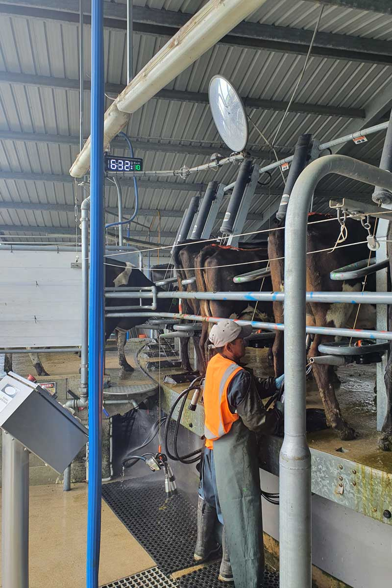 milking-by-time-rotary-dairy